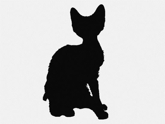 Nhìn bóng mèo cưng đoán giống loài - 4