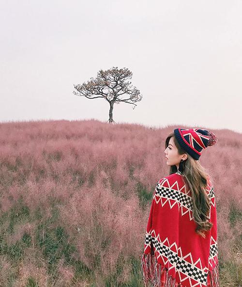 Trang Pháp mơ mànggiữa cánh đồng cỏ hồng đẹp như tranh ở Hàn Quốc.