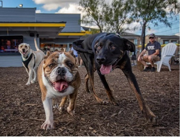 Những chú chó tại cơ sở Dallas-Fort Worth.