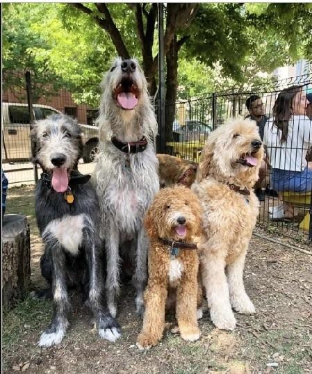 Có nhiều giống chó khác nhau và tính cách chúng cũng đa dạng: ngoan hiền, dễ thương, thậm chí hung tợn.