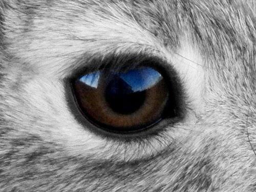 Nhìn đôi mắt phóng đại đoán con vật - 1