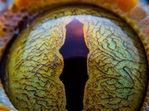 Nhìn đôi mắt phóng đại đoán con vật - 2