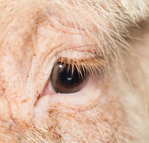 Nhìn đôi mắt phóng đại đoán con vật - 3