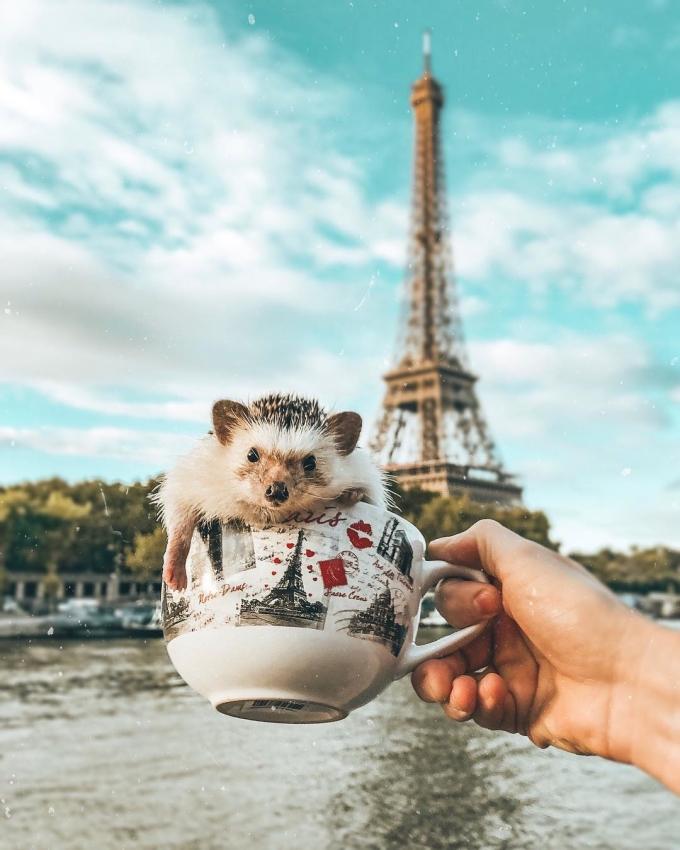<p> Talitha cực kỳ yêu thương thú cưng của mình. Cô chụp ảnh Mr Pokee ít nhất mỗi tuần một lần, và thường xuyên đem nó theo bên mình mỗi khi đi du lịch.</p>