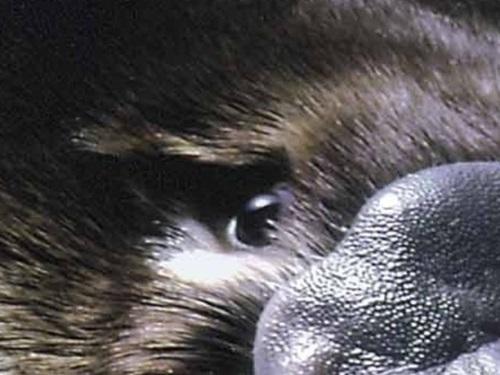 Nhìn đôi mắt phóng đại đoán con vật - 4