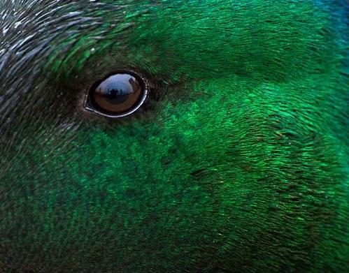 Nhìn đôi mắt phóng đại đoán con vật - 6