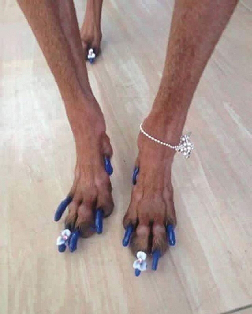 Chó cưng của Văn Mai Hương còn được sơn móng chân đính hoa, đeo cả vòng điệu đà chứng minh độ sành điệu.