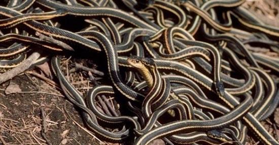 Khám phá các loài rắn độc qua những câu đố hóc búa - 4