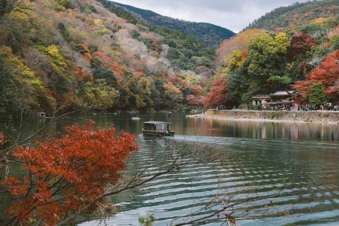 <p> Thời điểm tuyệt vời nhất để nhìn ngắm vẻ đẹp độc đáo của mùa lá vàng ở Nhật Bản bắt đầu từ giữa tháng 10 và kéo dài trong khoảng 1 tháng.</p>