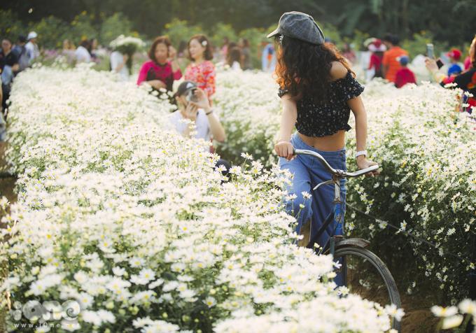 Giới trẻ Hà Nội chen nhau 'thả dáng' bên vườn cúc họa mi
