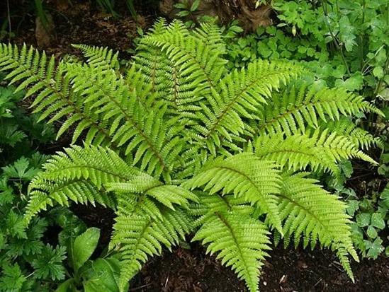 Các loài thực vật này có tên tiếng Anh là gì? - 1
