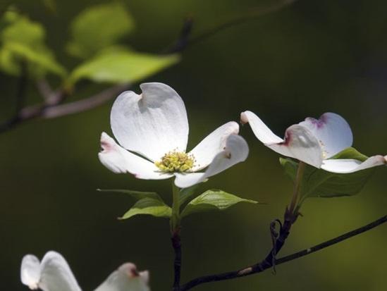 Các loài thực vật này có tên tiếng Anh là gì? - 5