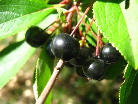 Bạn có biết những loại quả, hạt này? - 1