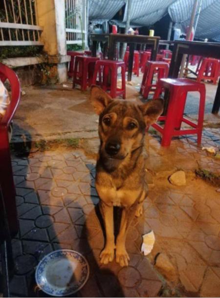 Chú chó này có đầy đủ đồ nghề để ăn xin cơ.