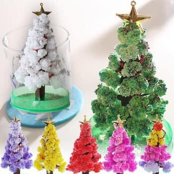 Cứ đến Giáng sinh là mua cả tá cây thôngvề tưới, nếu nở đúng vào Noel mọi điều ước sẽ thành... sự thật.