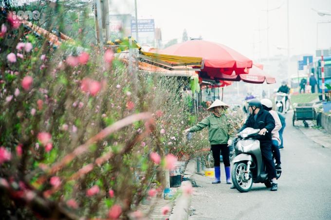 Đào chúm chím nở, bắt đầu từ vườn ra phố đón Tết