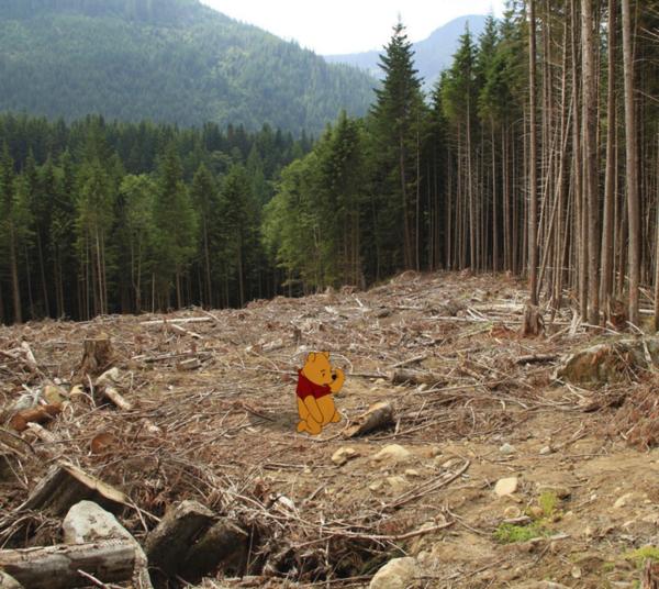 Vụ phá rừng hàng trăm mẫu tại Anh đã khiến cho gấu Poor không còn nơi sinh sống.
