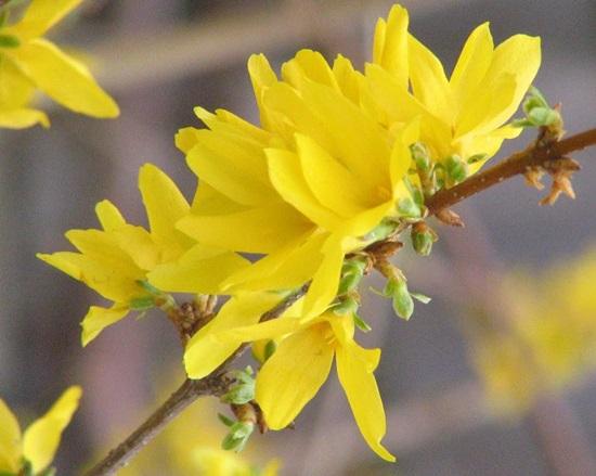Đọc vanh vách các loại hoa ngày Tết - 6