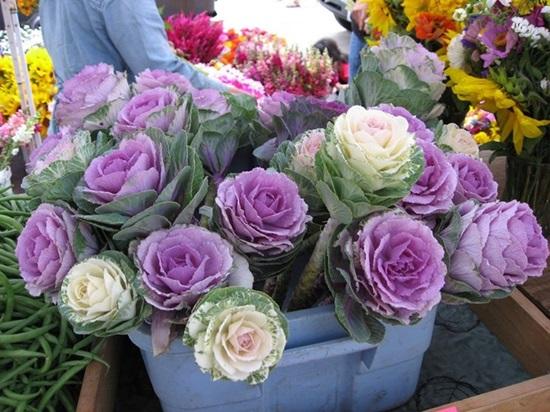 Đọc vanh vách các loại hoa ngày Tết - 7
