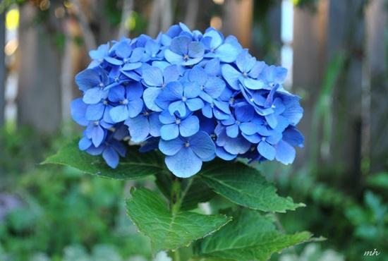 Đọc vanh vách các loại hoa ngày Tết - 1