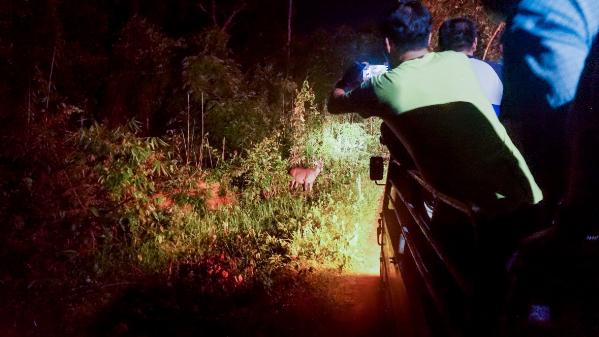 Xem thú đêm, một trải nghiệm thú vị tại Nam Cát tiên.
