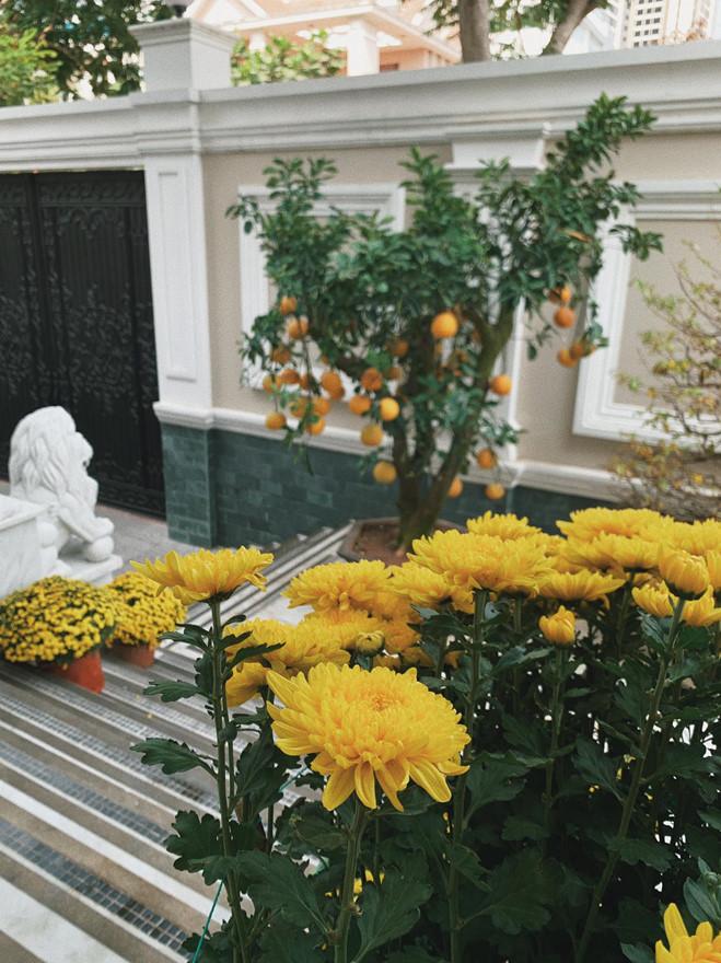 <p> Khóm cúc vàng rực tô điểm thêm màu sắc ấm áp cho căn nhà.</p>