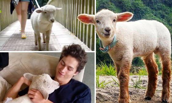 Sinh ra là phận cừu nhưng lúc nào cũng nghĩ mình là chó