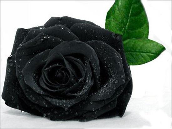 Bạn có hiểu hết về ngày Valentine? - 9