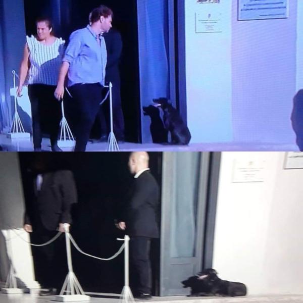 Chú chó Nala của Emiliano Sala, đã đợi bên ngoài trong đám tang của cậu chủ.