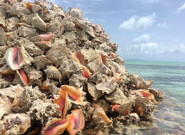 Đảo Conch được tạo ra từ hàng triệu vỏ ốc xà cừ.