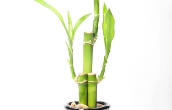 Thông thái phân biệt thực vật có độc hay không? - 10