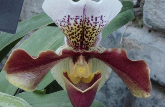 Thông thái phân biệt thực vật có độc hay không? - 1