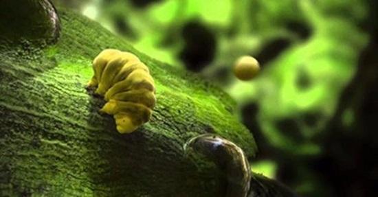 Ngàn vạn câu đố hại não về thế giới động vật - 1