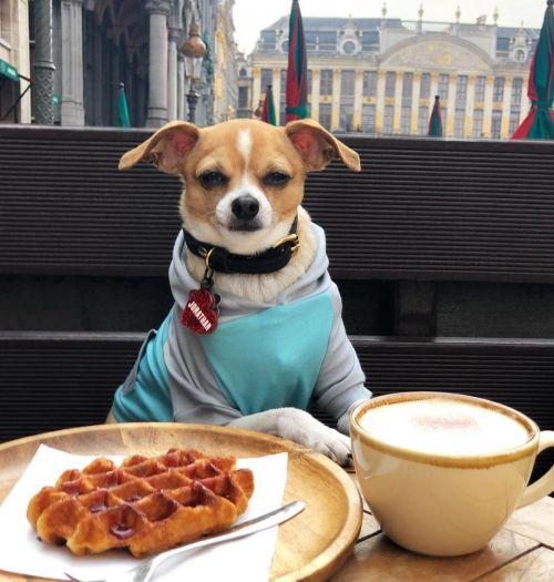 Cuộc sống đáng mơ ước của chú chó thoát khỏi 'án tử hình' trong chuồng thú - 4