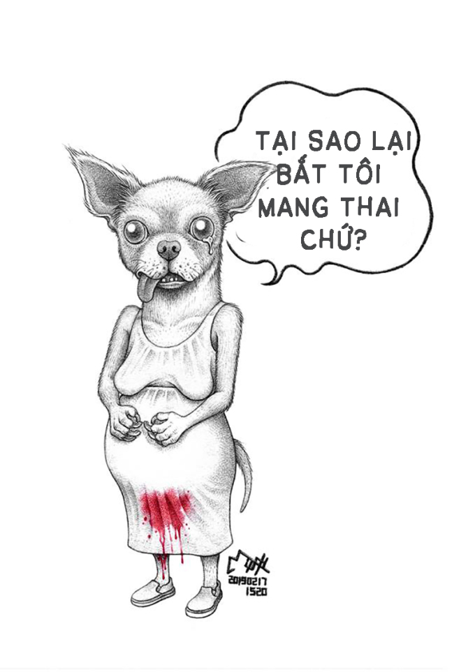 <p> Chihuahua là loài chó rất khó mang thai.</p>
