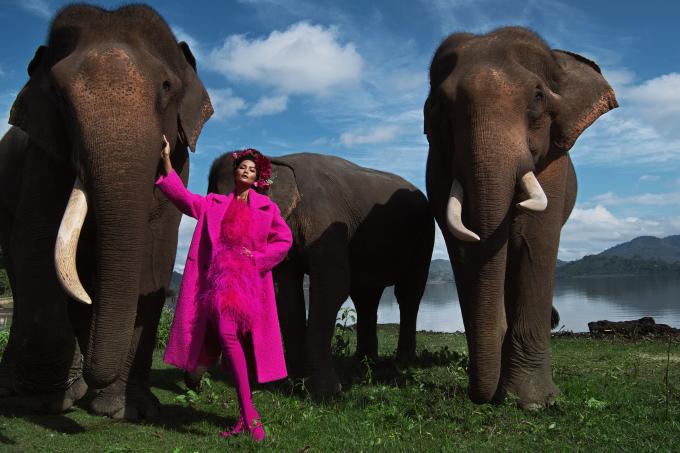 <p> Chụp hình cùng động vật là một thử thách khó ngay cả với những siêu mẫu chuyên nghiệp. Việc tạo dáng giữa đàn voi cho thấy khả năng chinh phục mọi concept của H'Hen Niê.</p>