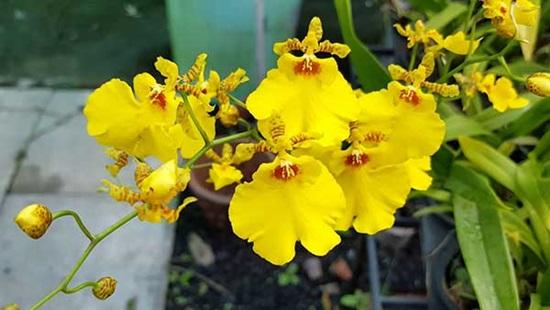 Trong hàng trăm loại phong lan bạn có biết loại nào không? - 5
