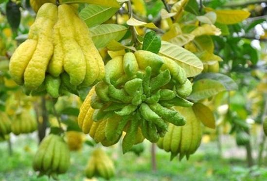 Kho từ vựng tiếng Anh về trái cây của bạn sâu rộng ra sao? (2) - 2