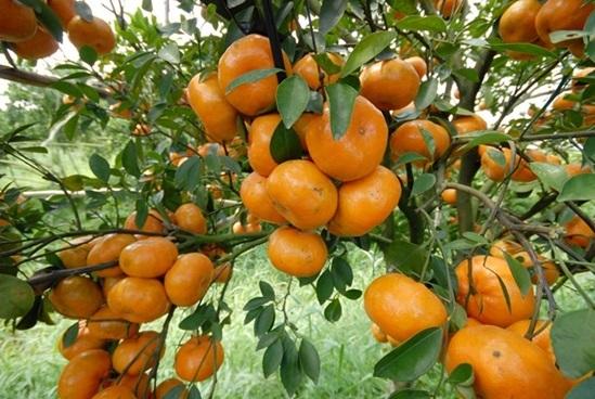 Kho từ vựng tiếng Anh về trái cây của bạn sâu rộng ra sao? (2)