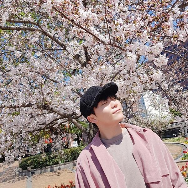 Seung Kwan (Seventeen) thả hồn trong khung cảnh hoa anh đào lãng mạn.