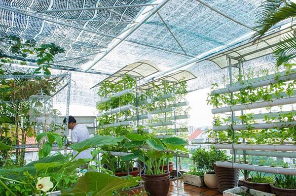 Sân thượng là vườn thủy cảnh, cung cấp đủ rau sạch cho gia đình Vũ Thu Phương.