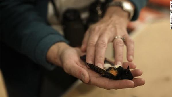 Một con chim bị chết sau khi va chạm với tòa nhà.