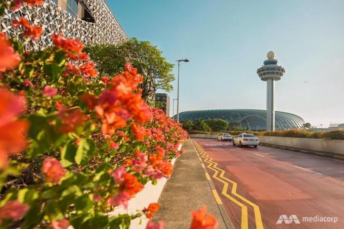 <p> Chia sẻ với truyền thông, Giám đốc điều hành CAG Hung Jean nói, sân bay Changi dự kiến đón khoảng 40 đến 50 triệu khách mỗi năm và hướng tới không chỉ người dân địa phương mà cả những hành khách quá cảnh muốn nghỉ ngơi hơn 5 giờ tại Singapore.</p>
