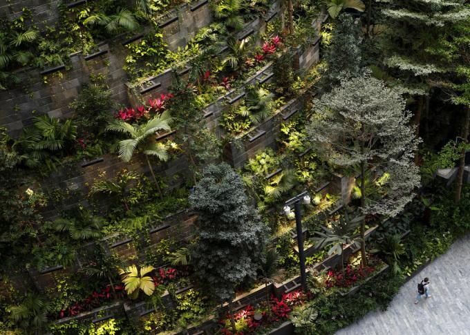 """<p> Ông Jeremy Yeo (CAG ) cho biết có hơn 120 loài thực vật ở """"Thung lũng rừng"""", 5% trong số đó là các loài cây địa phương, bao gồm dương xỉ và hoa lan. Hai cây được quản lý đặc biệt là ô liu từ Tây Ban Nha, có tuổi đời hơn 100 tuổi.</p>"""