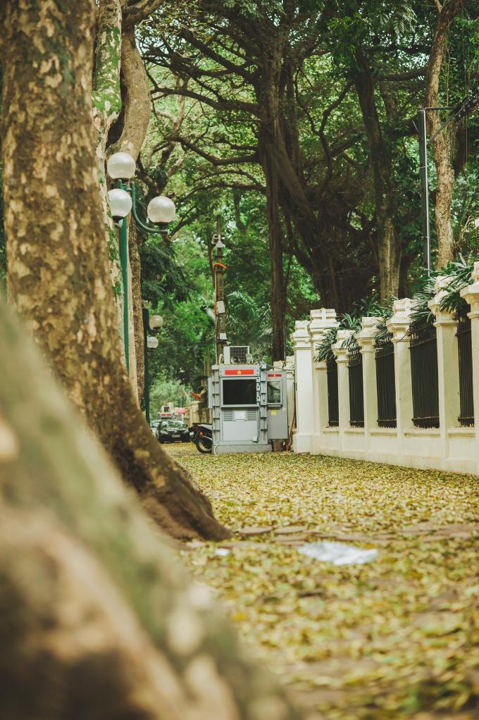 <p> Những ngày này, vỉa hè các phố Phan Đình Phùng, Hoàng Diệu, Đinh Tiên Hoàng như được phủ vàng một lớp lá khô.</p>