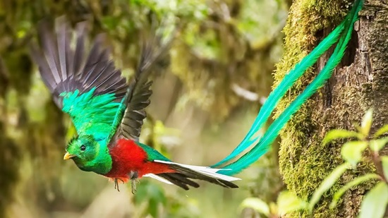 Tên những con chim sặc sỡ này là gì?