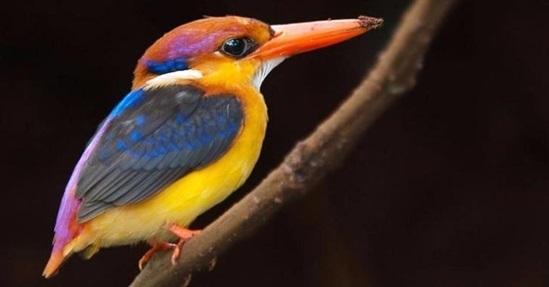 Tên những con chim sặc sỡ này là gì? - 4