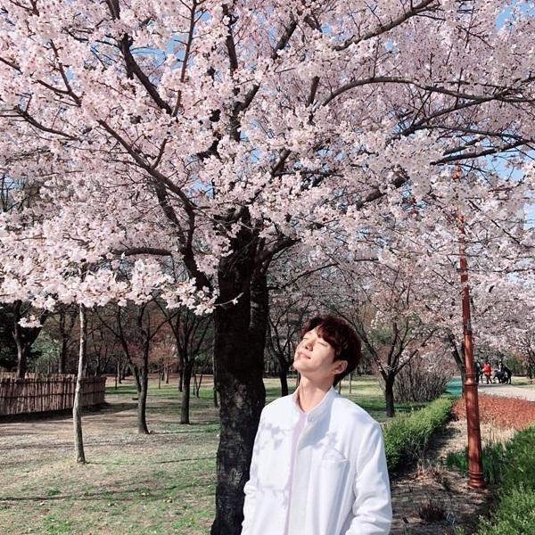 L (Infinite) mơ màng dưới hoa anh đào đẹp như một cảnh phim.