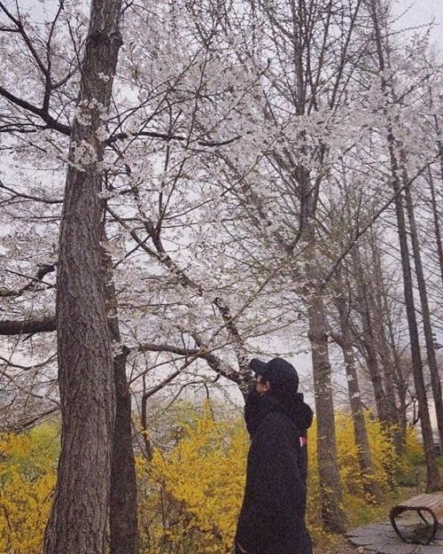 Chan Yeol che kín mặt đi ngắm hoa anh đào.