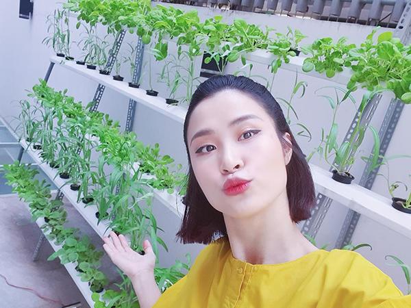 Đông Nhi khoe vườn rau xanh mướt dù mới trồng được 15 ngày.